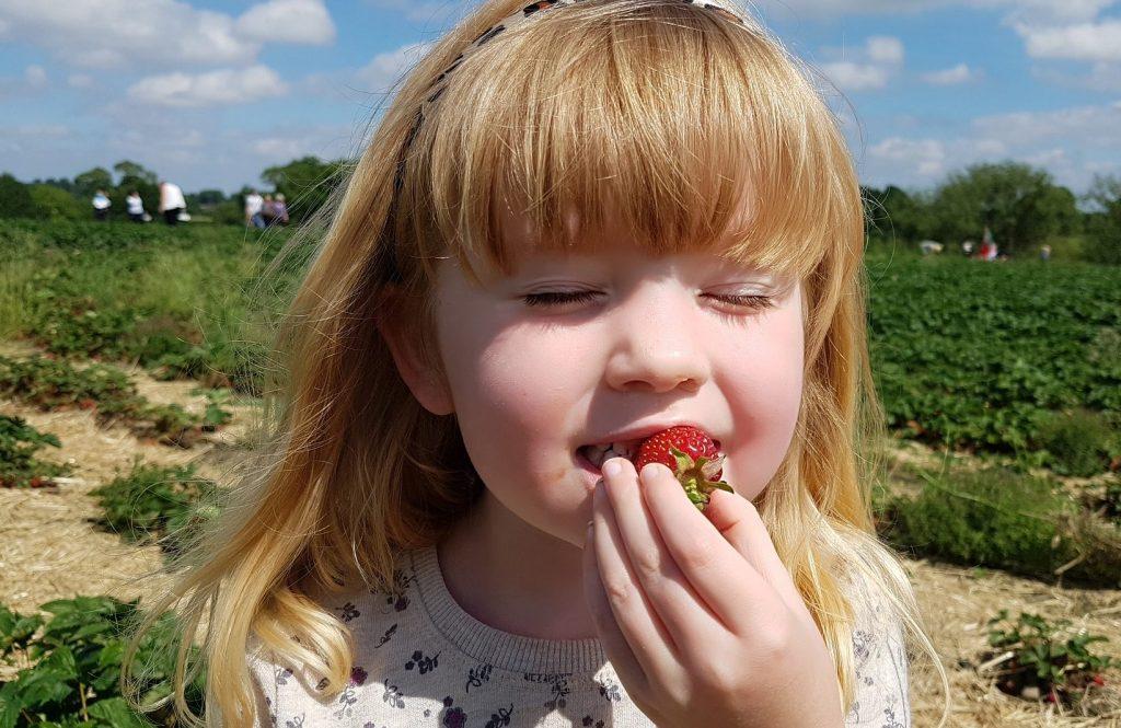 Підживлення полуниці, винограду і яблунь з грушами
