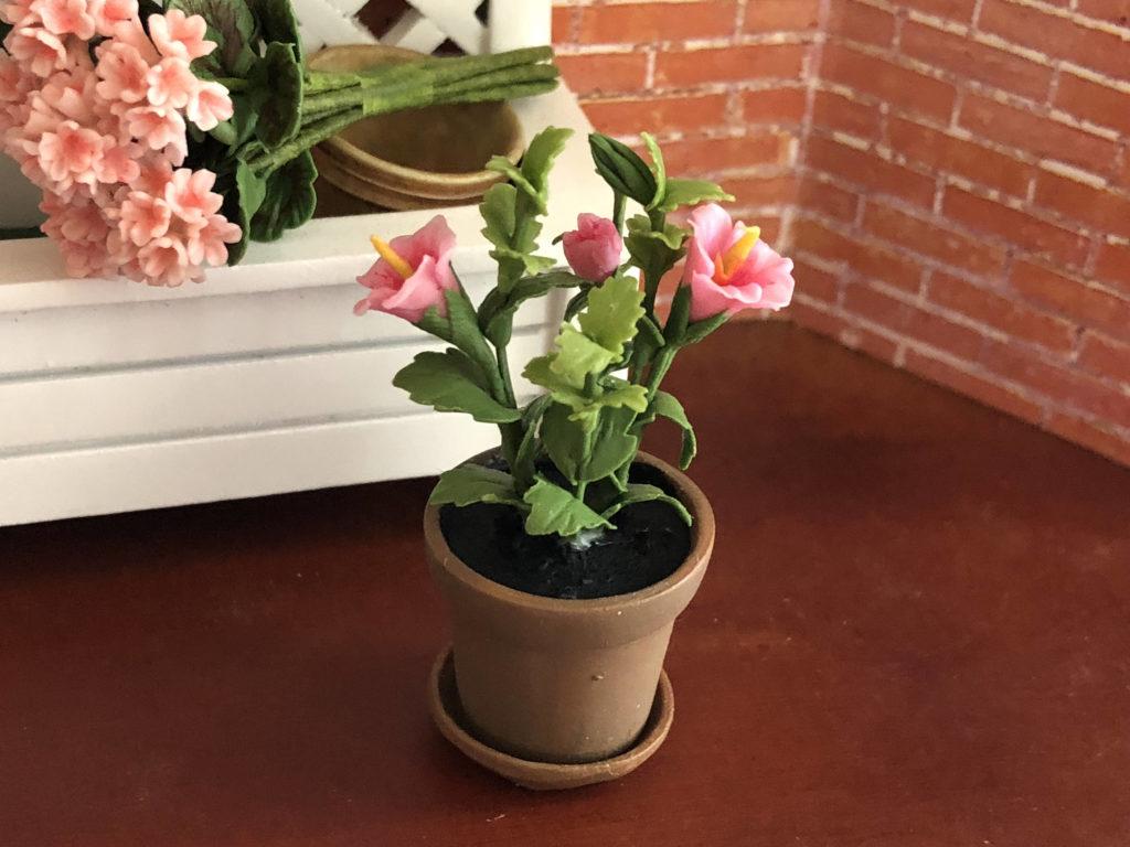 Кімнатні рослини для жіночого щастя: