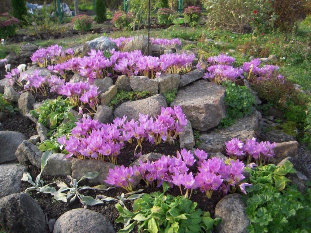 Які квіти висаджувати в серпні і коли вони будуть цвісти