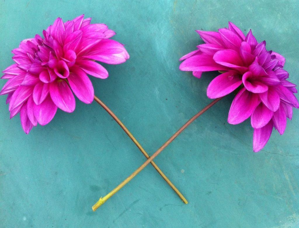Що сприятливо робити на городі і в теплиці, в саду і квітнику у червні 2021