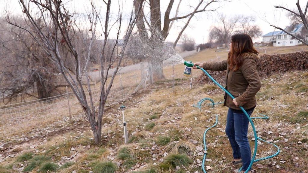 Як правильно підготувати сад до зими