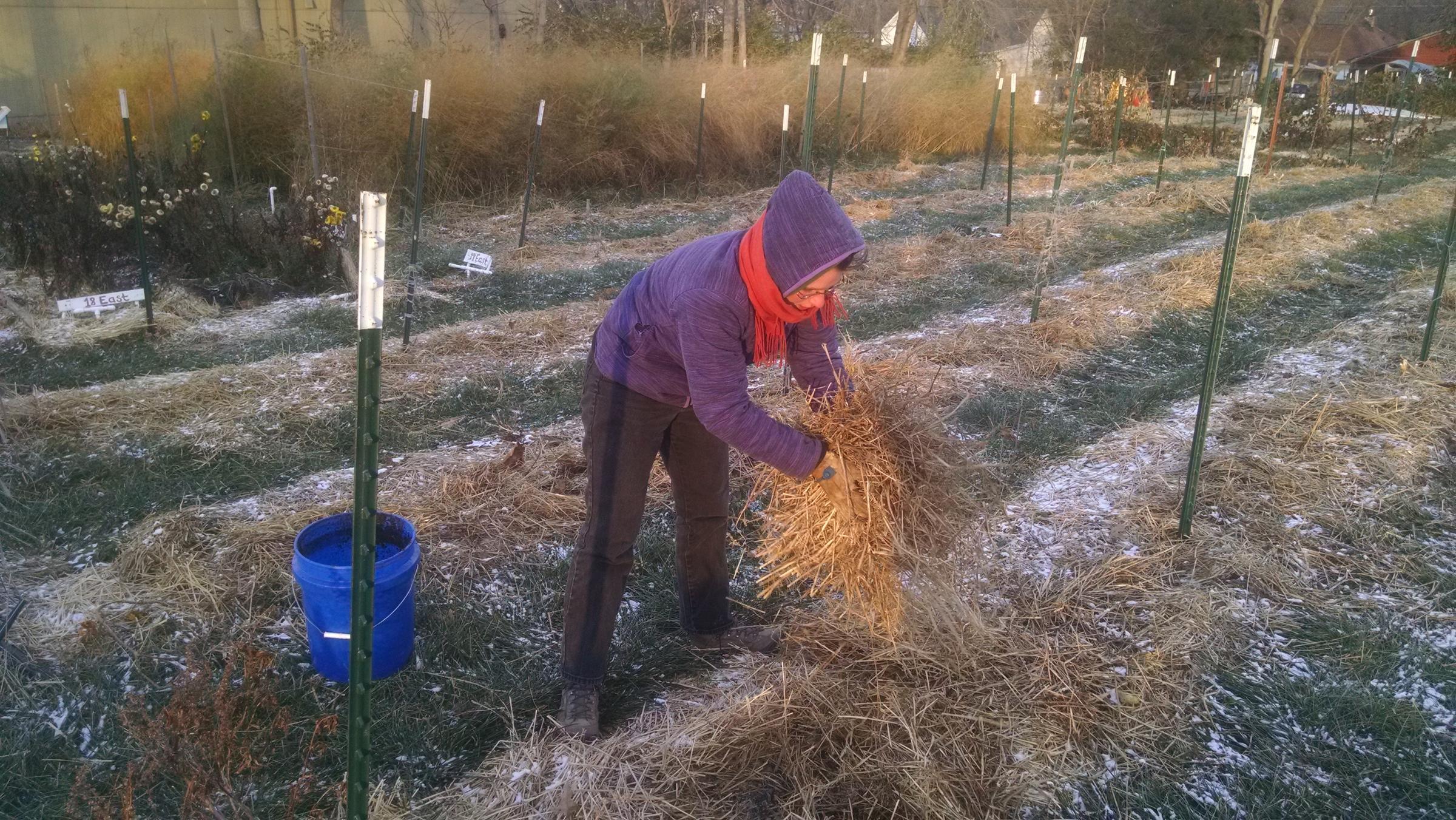 Озимі посадки: секрети висівання рослин під зиму