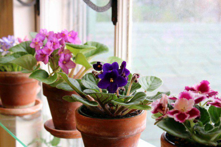 Які кімнатні рослини обрати для кухні