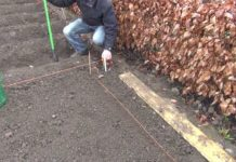 Озима посадка моркви: температурні показники і основні правила