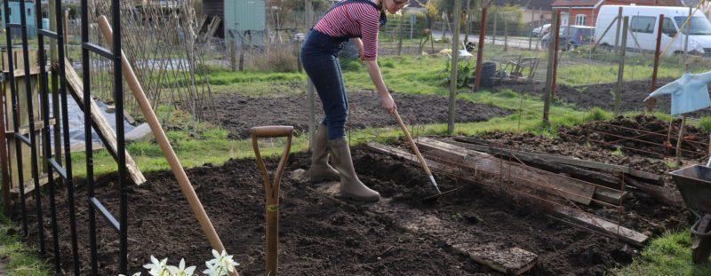 Коли садити картоплю навесні 2020 року радить посівний календар