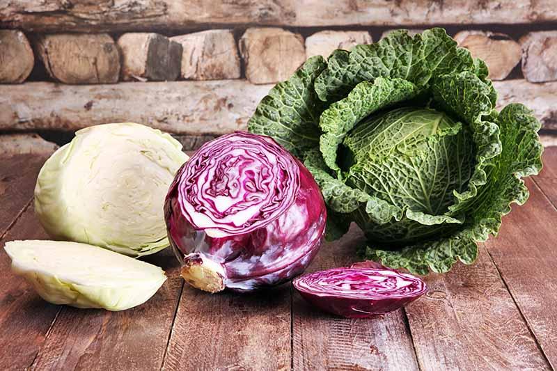 Посівний календар для овочів на 2020 рік по місяцях