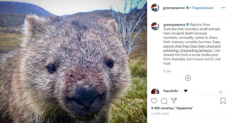 Пожежа в Австралії показала «людяність» звірів
