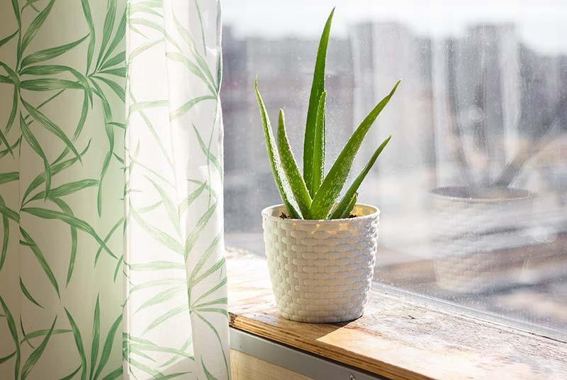Магічні рослини, які приносять в домівку позитивну енергію