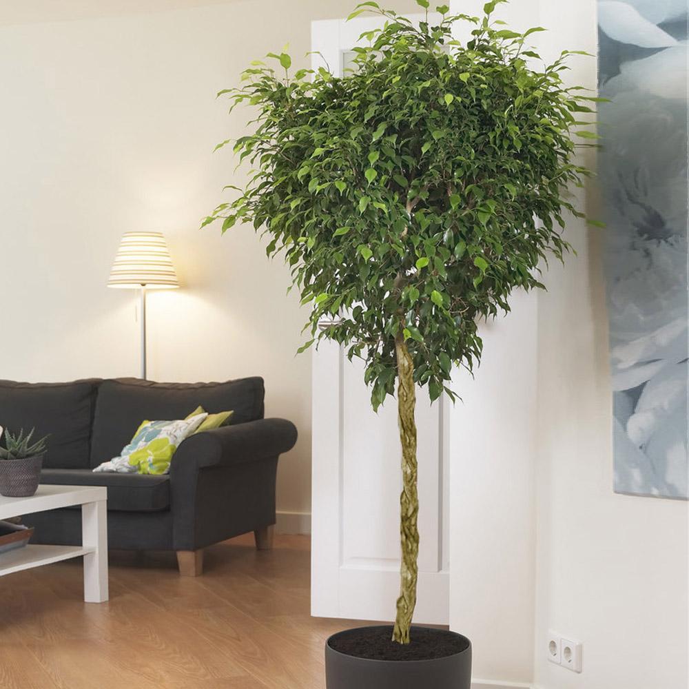 Грунт для кімнатних рослин – запорука їх гарного самопочуття і інтенсивного зростання домашнього живого декору