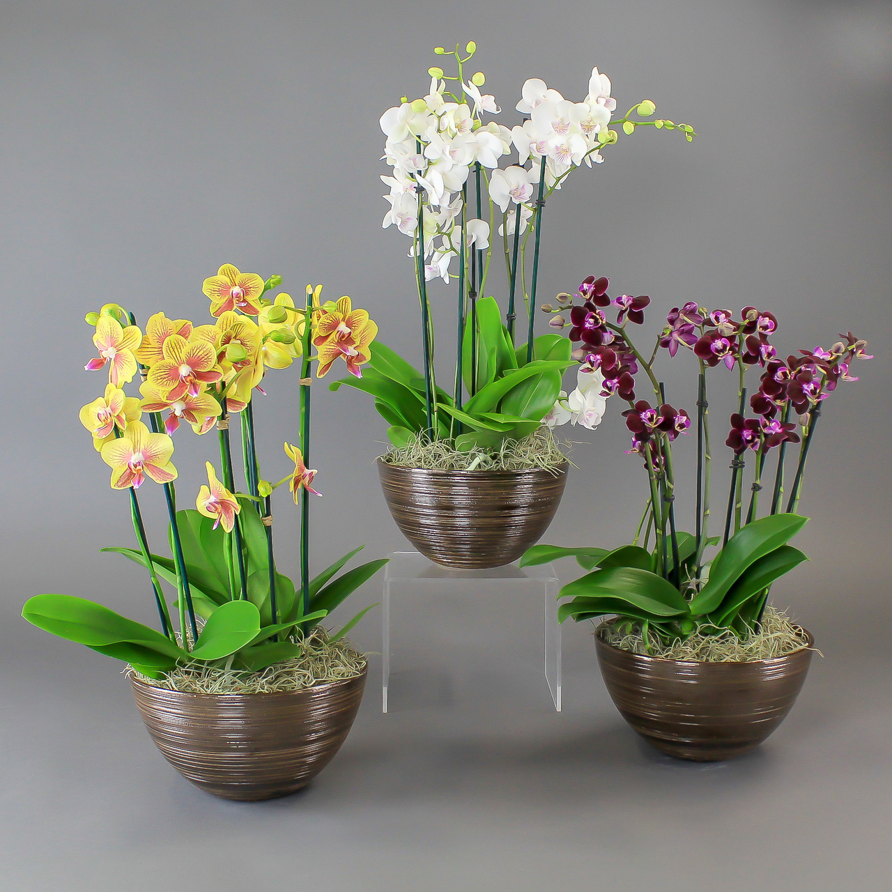 Орхідея і негативні прикмети