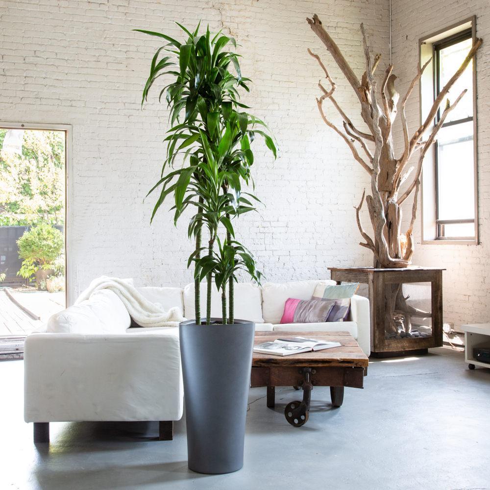 Грунт для кімнатних рослин – запорука їх гарного самопочуття