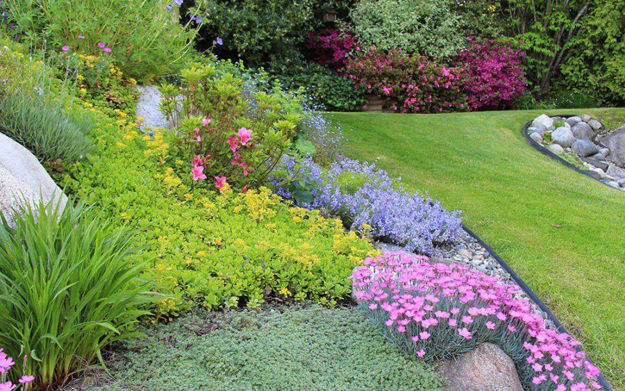 Ґрунтопокривні рослини: їх переваги для відкритих ділянок і для затінених