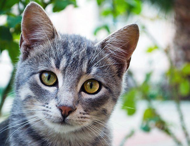 Стрелць має тварину покровителя - кота