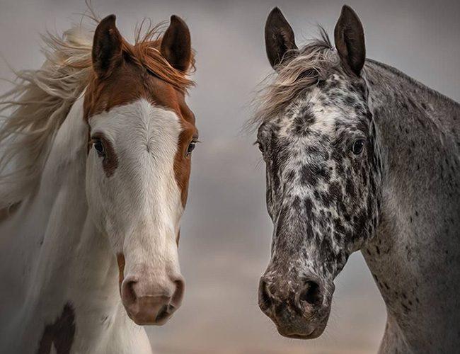 Козеріг і Кінь підтримують один одного на тонкому рівні