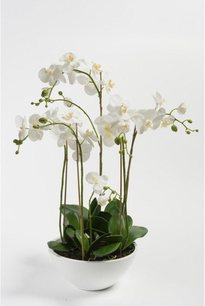 Орхідея: цікаві прикмети і забобони