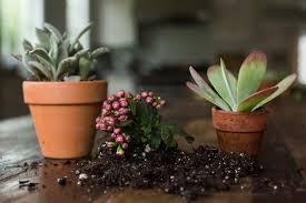 Місячний календар кімнатних рослин на грудень 2020: дати пересадки і догляду за квітами